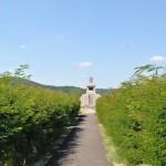 Monumentul Proclamatiei de la Pades - calea de acces catre monument